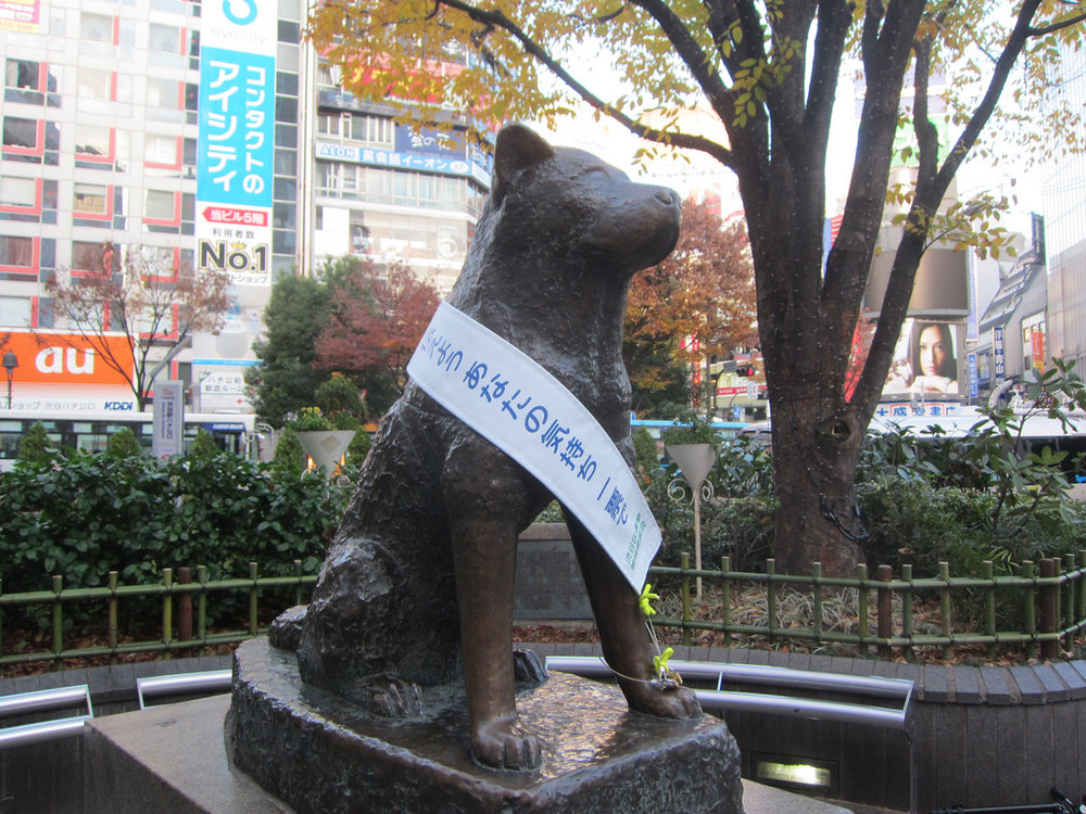 One of the best things to do in Tokyo is visit Hachiko Statue