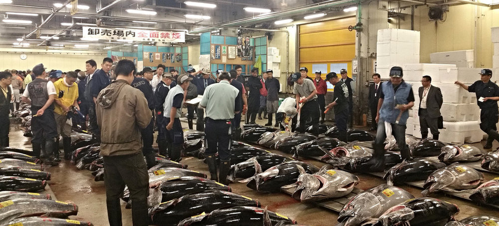 One of the top things to do in Tokyo is visit the Tsukiji Fish Market