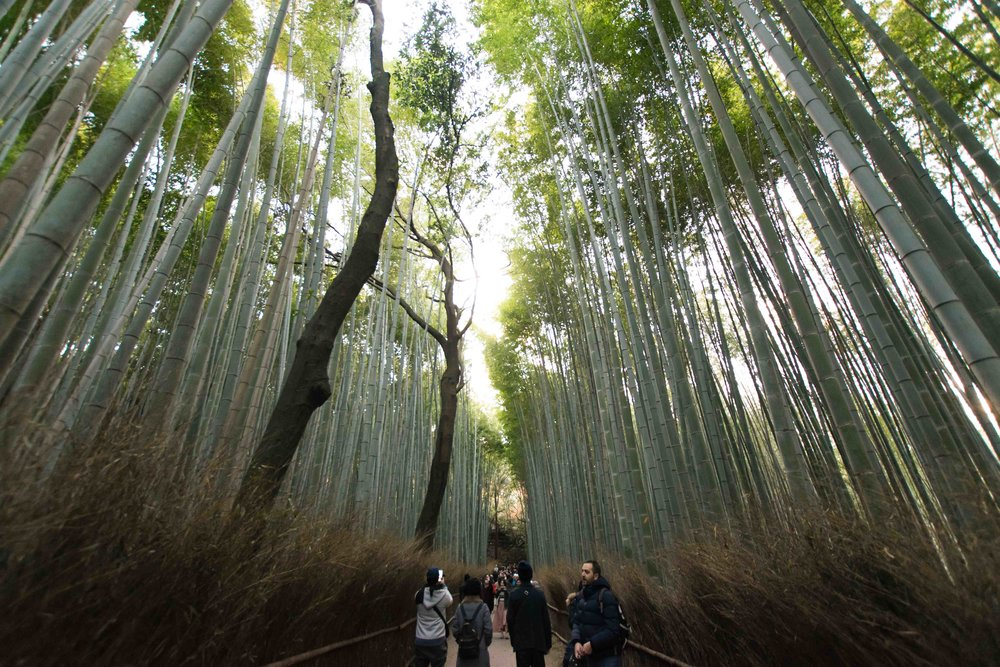Bamboo Forest in Arayshimaya