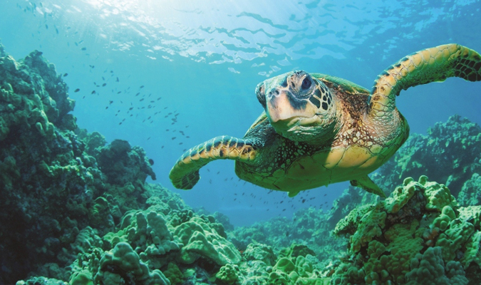 Swimming with turtles is one of the unique experiences you can have in Tulum.