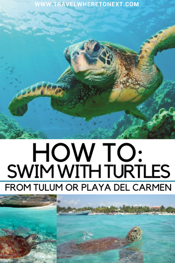 Heading to Tulum or Playa Del Carmen soon? Learn how to swim with turtles while you are there! One of the best things to do while in Mexico.