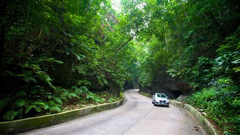 Winding road of Fern Gully