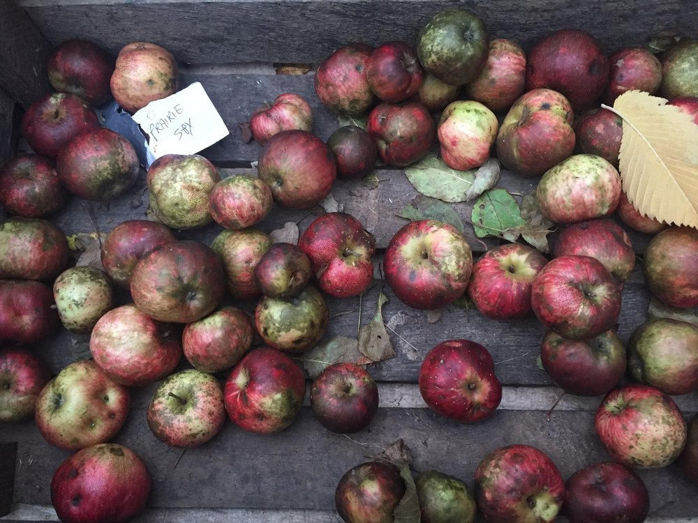 Fall Apples at Union Square Farmer's Market Photo By: Danielle Rehfeld Colen
