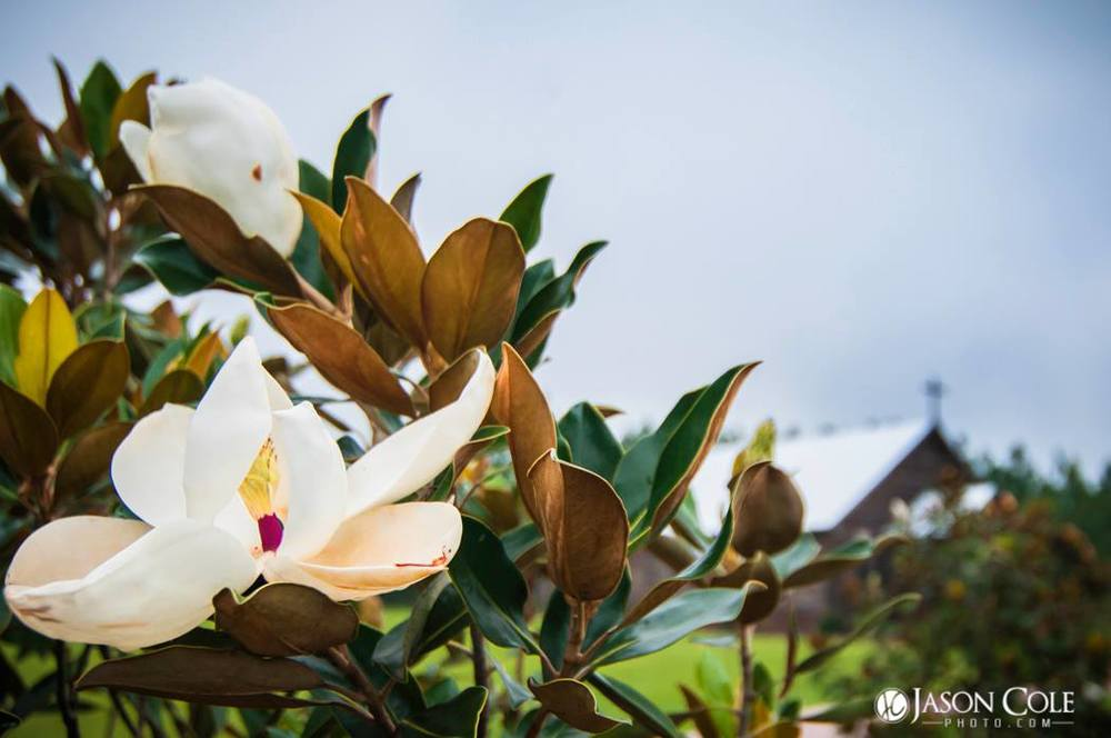 Pocketful of Sunshine Event Design| Full Service Wedding Planning In Columbia, SC | Beautiful Magnolias In Bloom At Hidden Acres Cabin