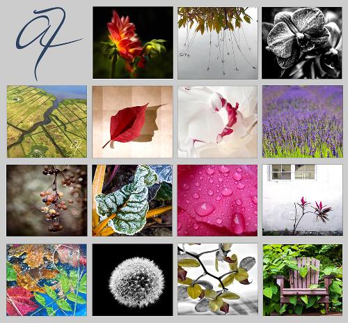 Small Works Botanical image.jpg
