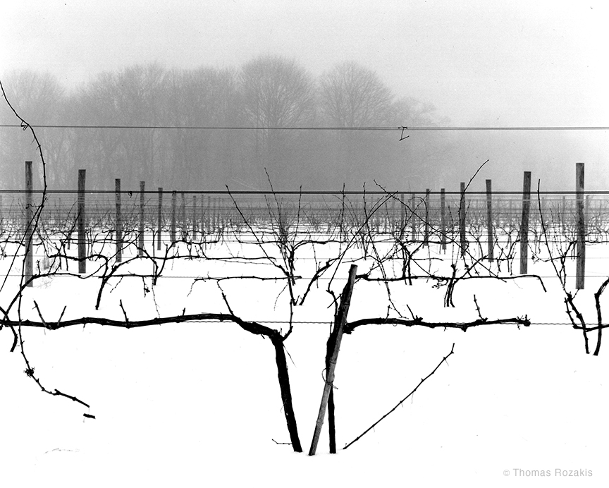 Vineyard Under Snow by Thomas Rozakis