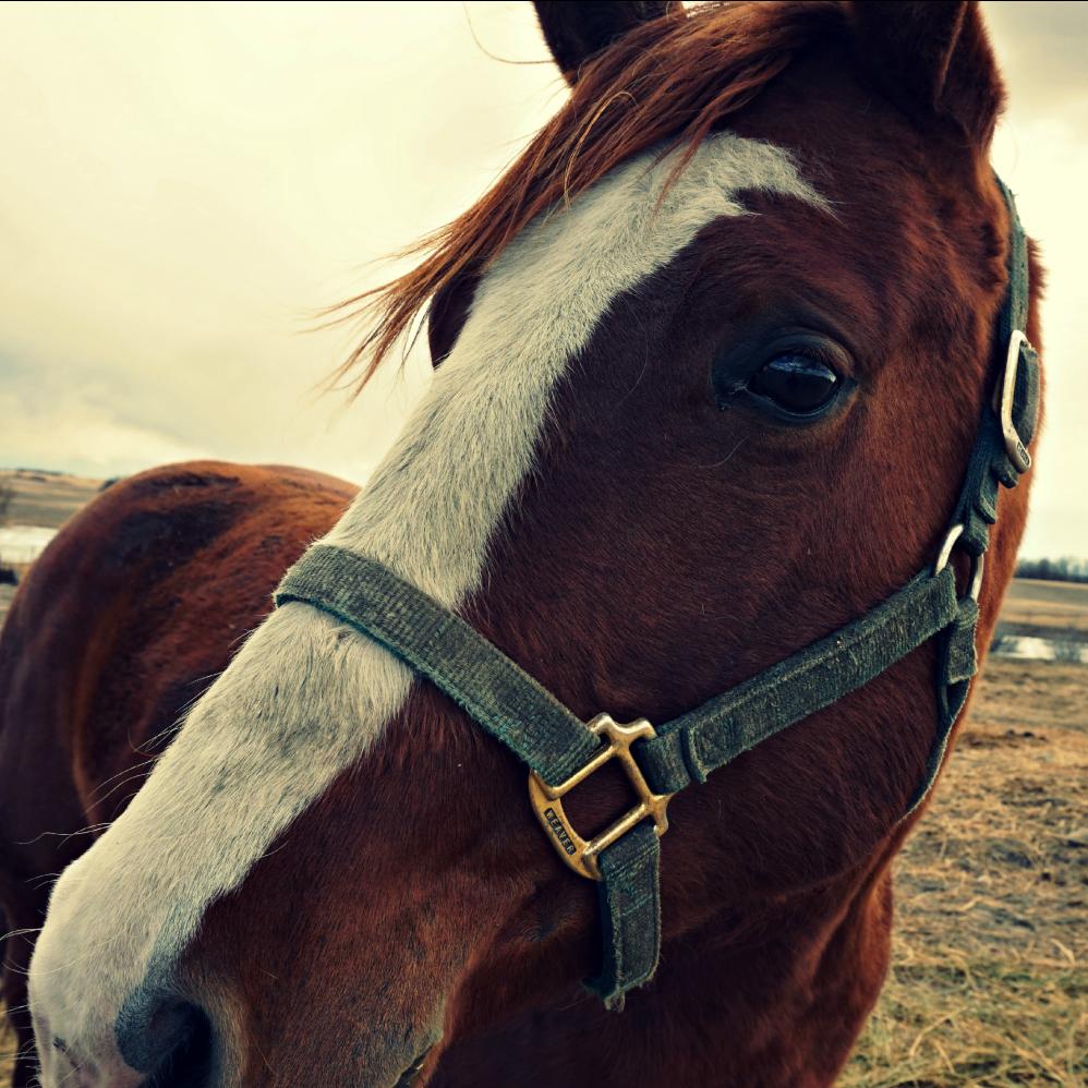 horse sq.png