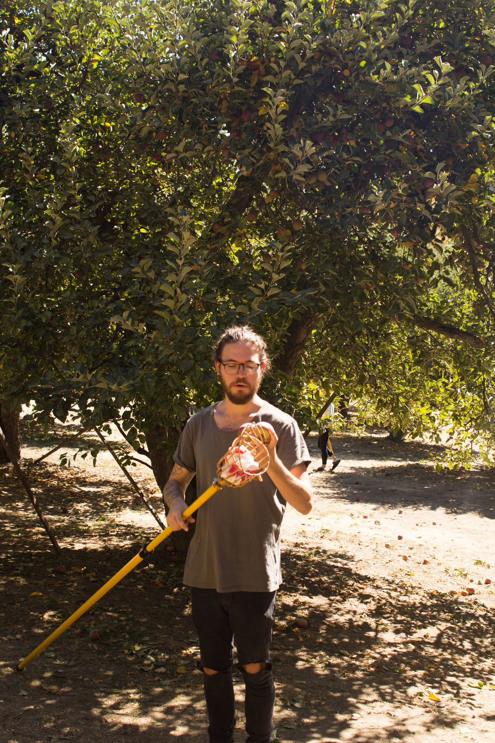 applepicking-11.jpg