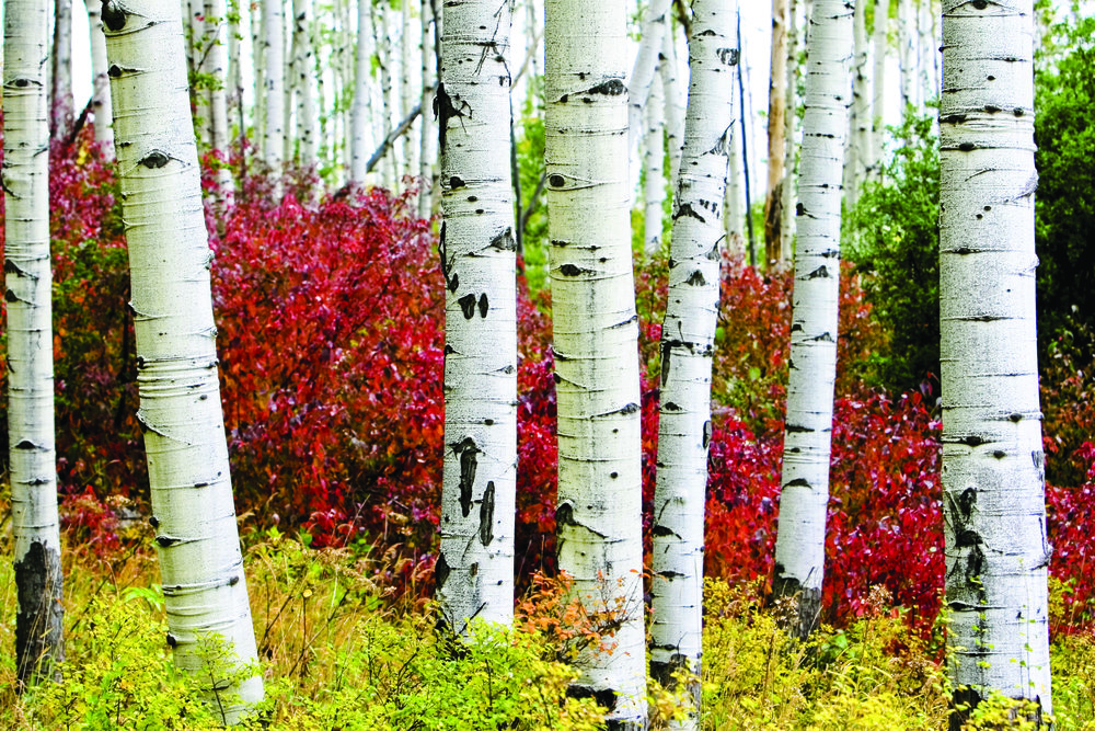 Upper right, the aspens and shrubbery create the perfect scene on the way to Shrine Pass. Photo: Matt Inden/Miles