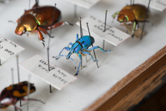 Photo: courtesy May natural History Museum