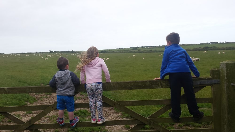 My three little lambs spotting sheep in Aberdaron, Wales
