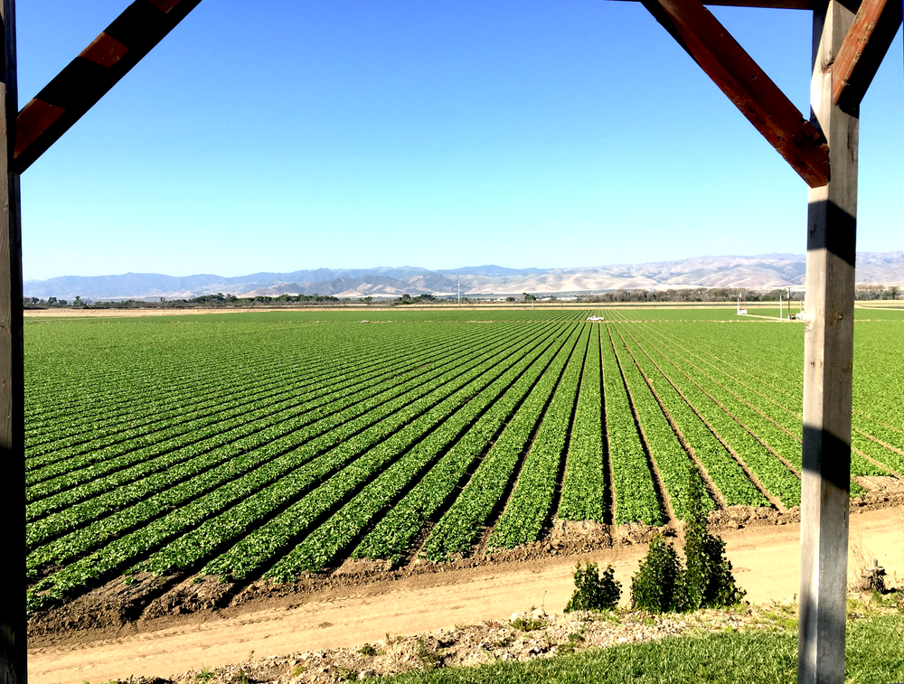 Salinas Valley View