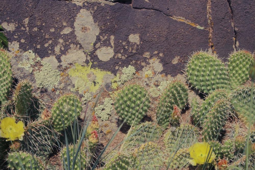Rio Arebe County, New Mexico
