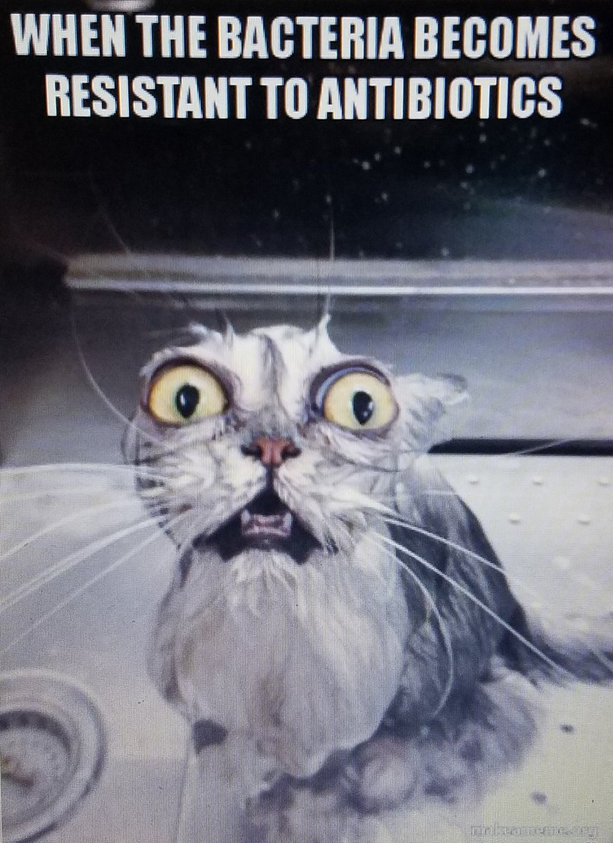 Payton Ferris meme 3.jpg