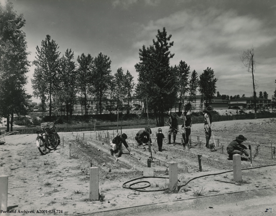 Vanport residents working in garden, circa 1944: A2001-025.724 - Portland City Archives