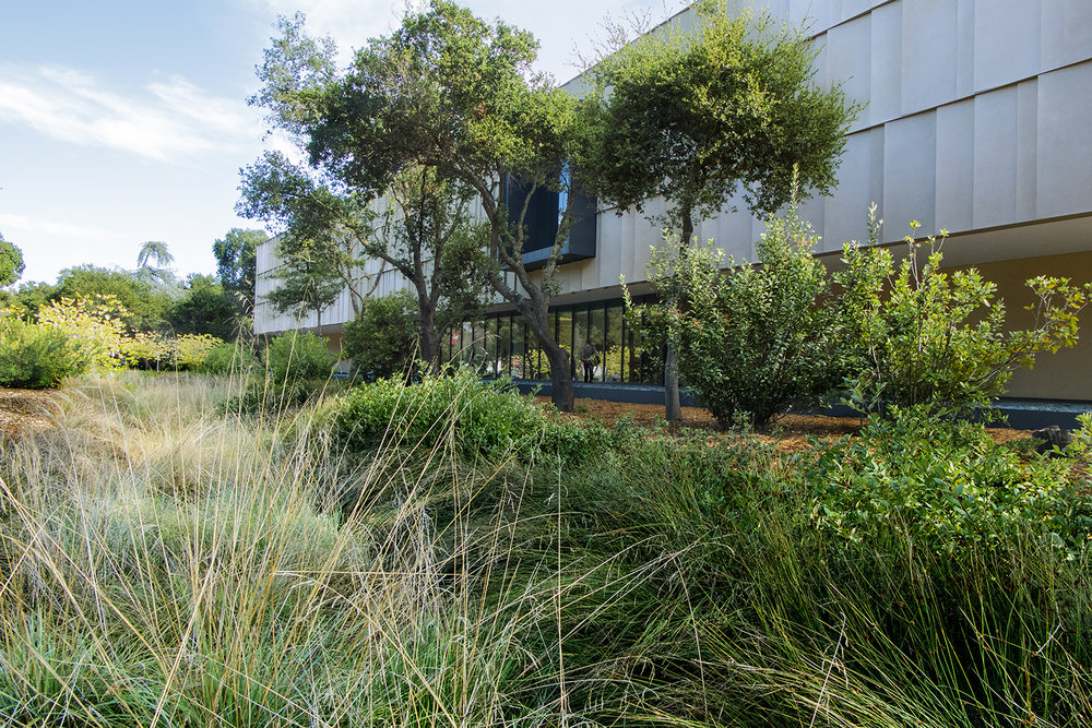 The bioswale running alongside the Anderson Collection serves as both a functional stormwater treatment area and a beautiful landscape element