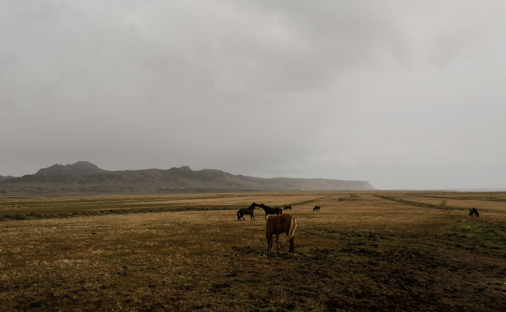 IcelandWeddingPhotosElopementBlogPost-173.jpg
