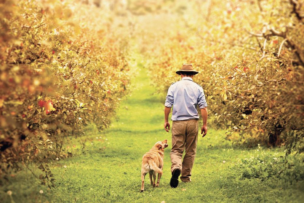 Horticulture Australia Aussie Apples
