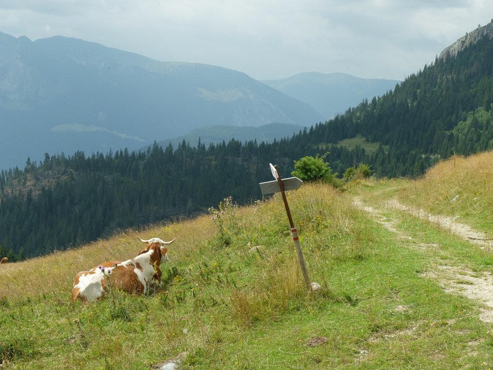 Rugova-mountains-Kosovo-b2c5657af3d4.jpg