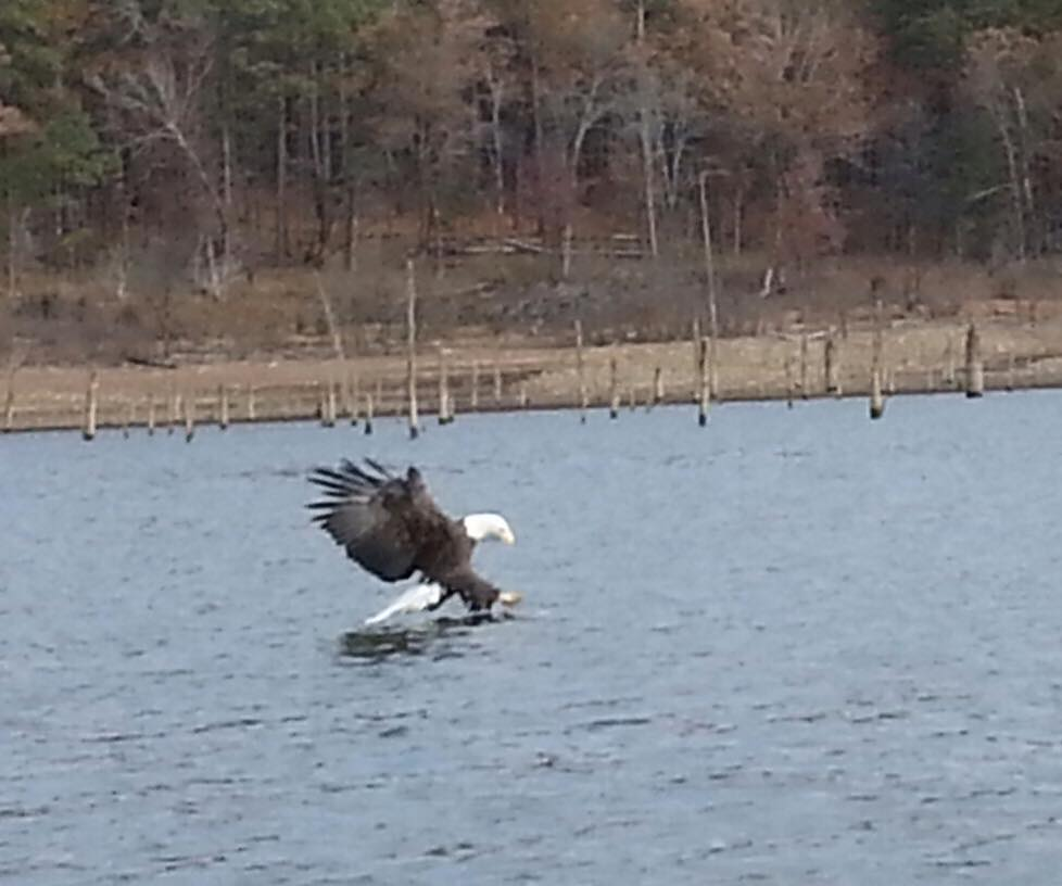 bald-eagle-broken-bow-lake