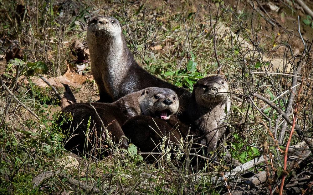 broken-bow-lake-4-seasons-fishing-guide-service-otter-family-1.jpg