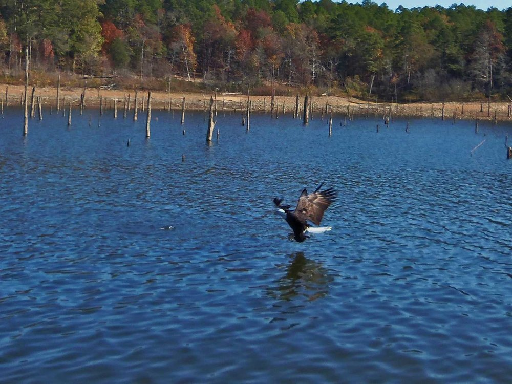 broken bow lake 4 seasons fishing guide service_37.jpg