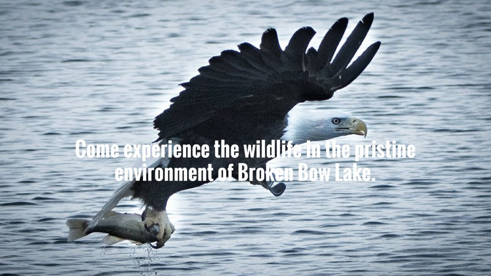 broken-bow-lake-4-seasons-fishing-guide-service-bald-eagle-4.jpg