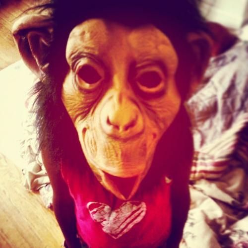 monkey .png