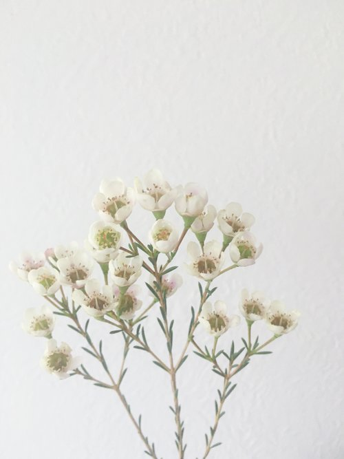 Flower Library Celebrate Dallas Texas Wedding Planner Florist