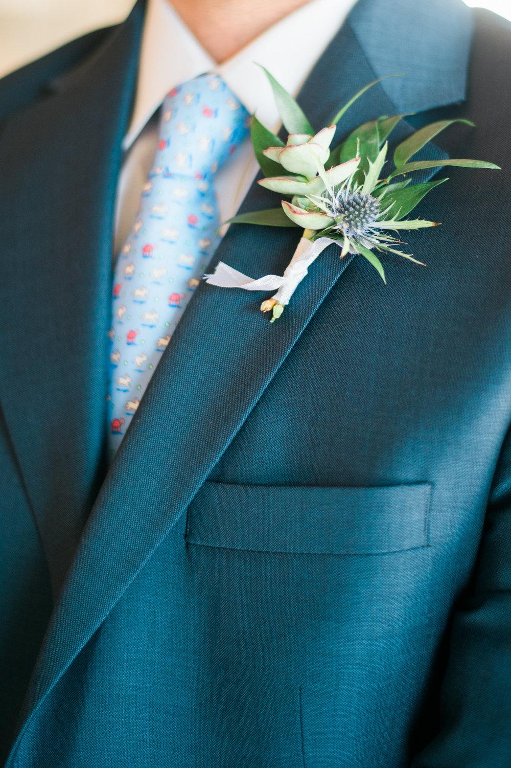 succulent, blue thistle, italian ruscus