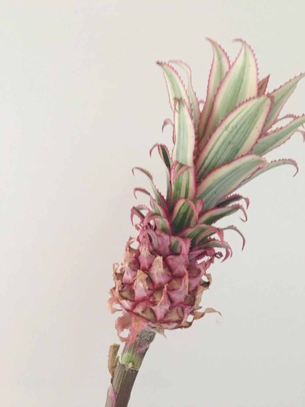 PINK MINI PINEAPPLE