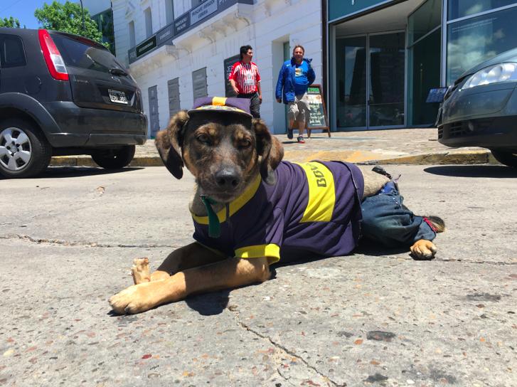 A doggie friend in La Boca supporting his local team.