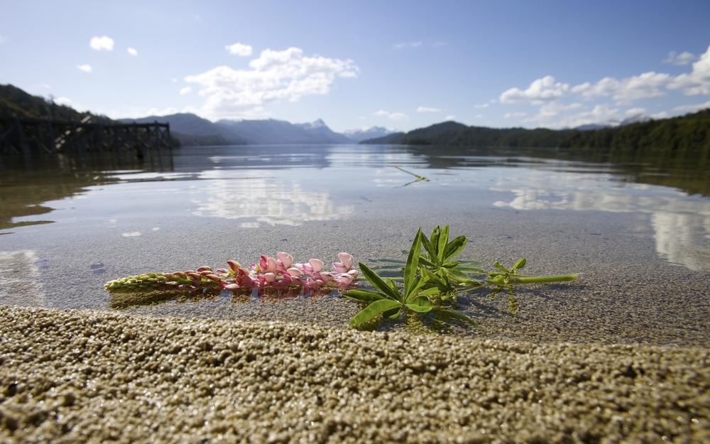 A lost flower on Lago Espejo