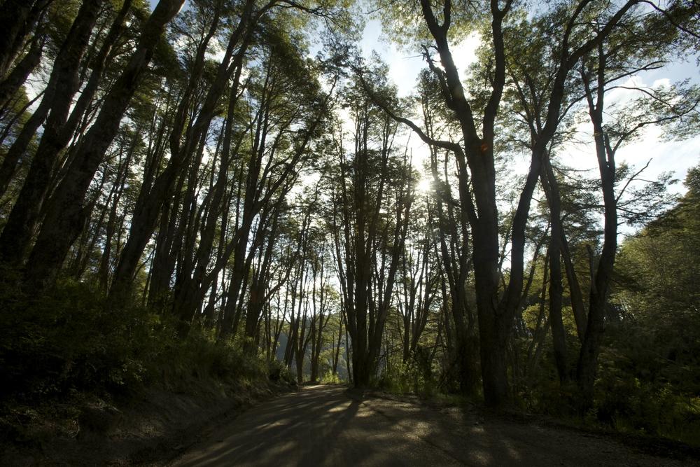 Trees leading down to our favorite lake, Lago Espejo.