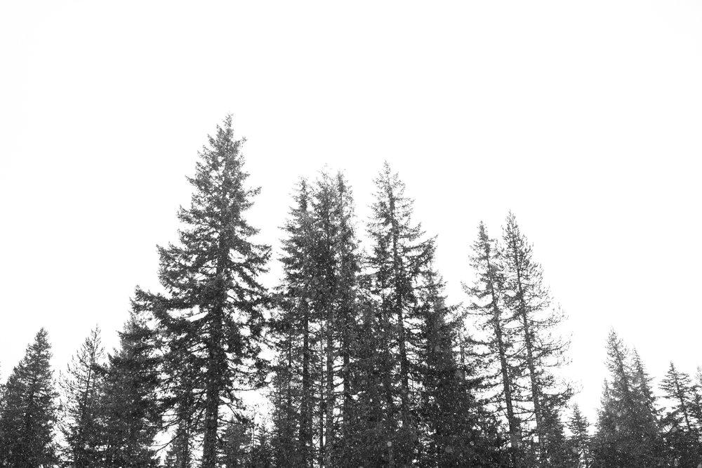 Trillium Lake Snowy Mt Hood, Oregon Engagement Session 3.jpg