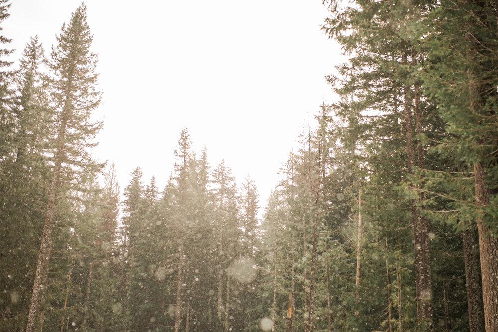 Trillium Lake Mt Hood, Oregon Engagement Session.jpg
