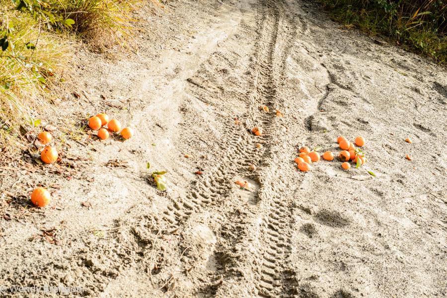 Oranges (1 of 1).jpg