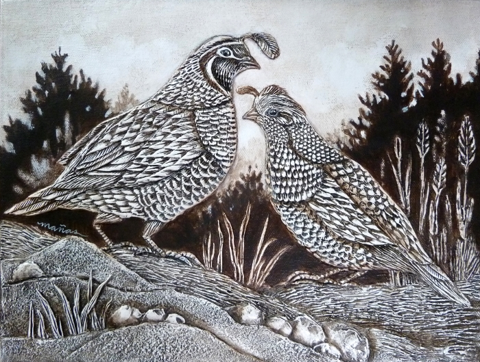 California Quail Living in Oregon