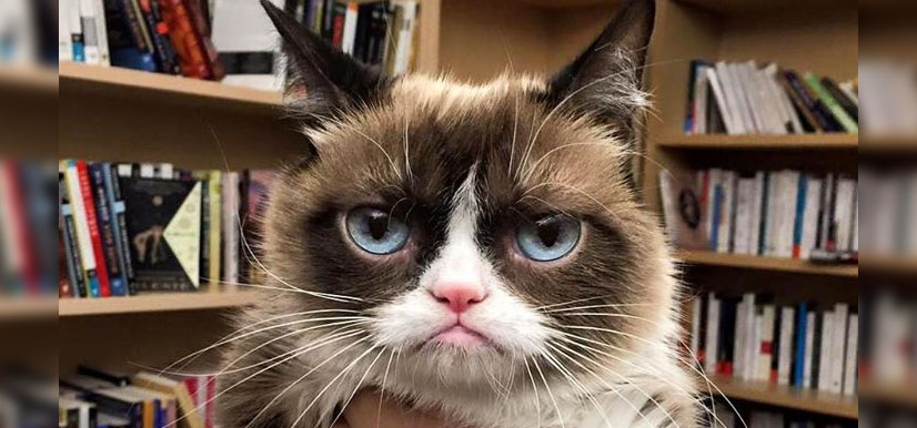 Grumpy Cat | 8 Million Facebook Likers