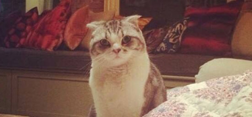 Meredith | Taylor Swift's Cat