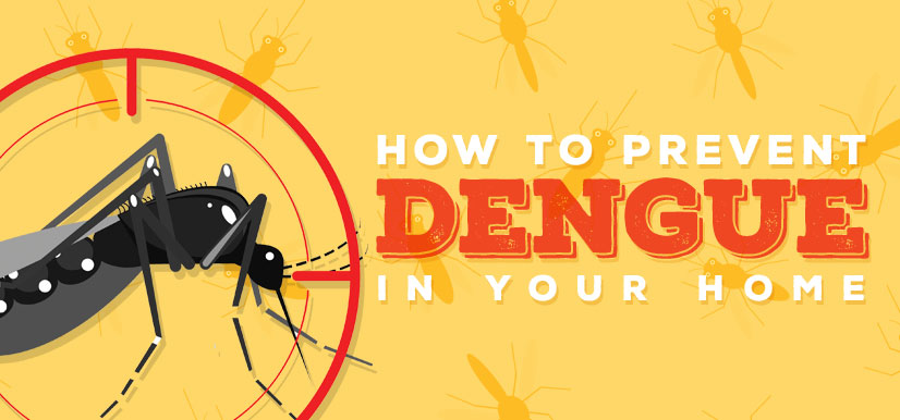 How to Prevent Dengue in your Home