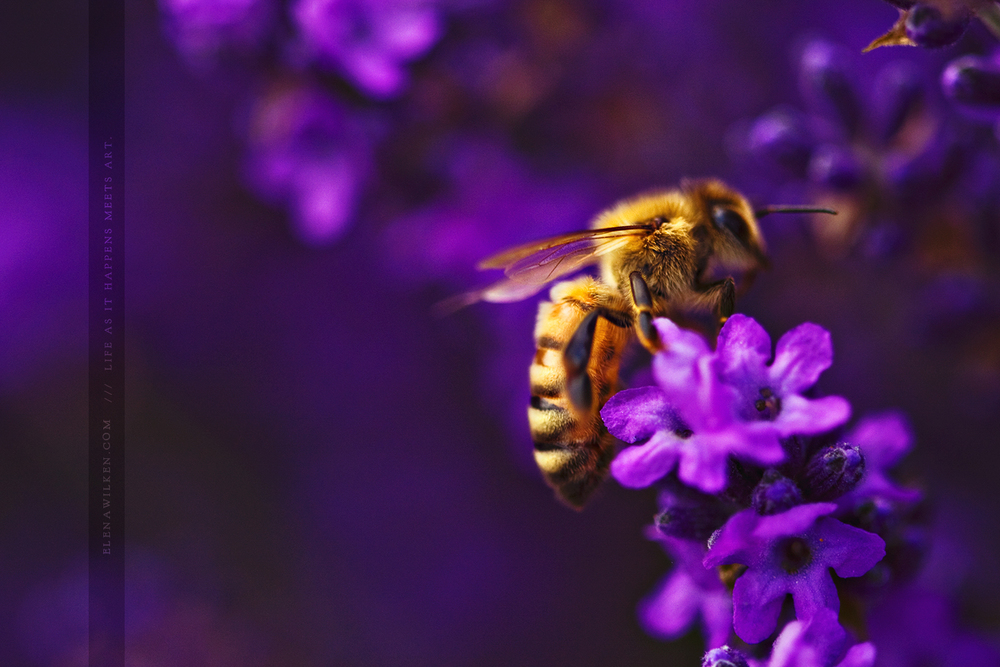 elenaw-bee.jpg