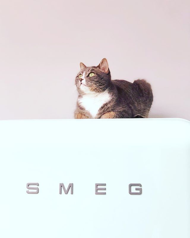 It's saturday again so that means cleaning the house. Tomorrow will be more fun because i'm going to the Swanmarket in Antwerp. What are your plans for this sunny weekend? ☀️💕 •still a bit sad we don't have our Smeg anymore. It was our cat's fav spot 😻😹 . . . . . . #interior #scandinavisch #zwartwitwonen #whiteinterior #interior4all #interior123 #homedecor #mynordicroom #nordichome #interiør #interiorwarrior #scandinavischwonen #instahome #witwonen #stoerwonen #smeg #smegbe #smeg50style