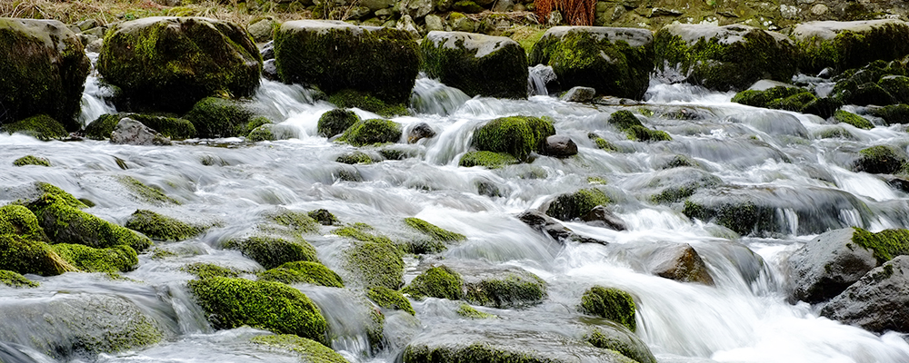 Environmental Pic 3.jpg