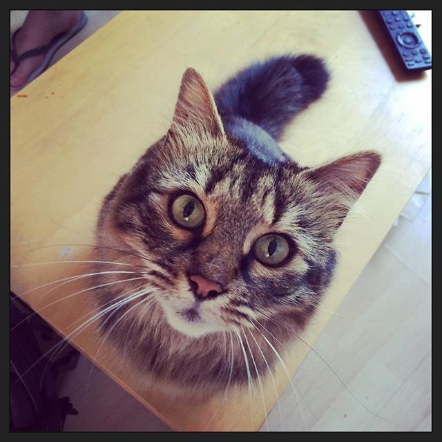London office cat #jollygooddigital #sushithecat