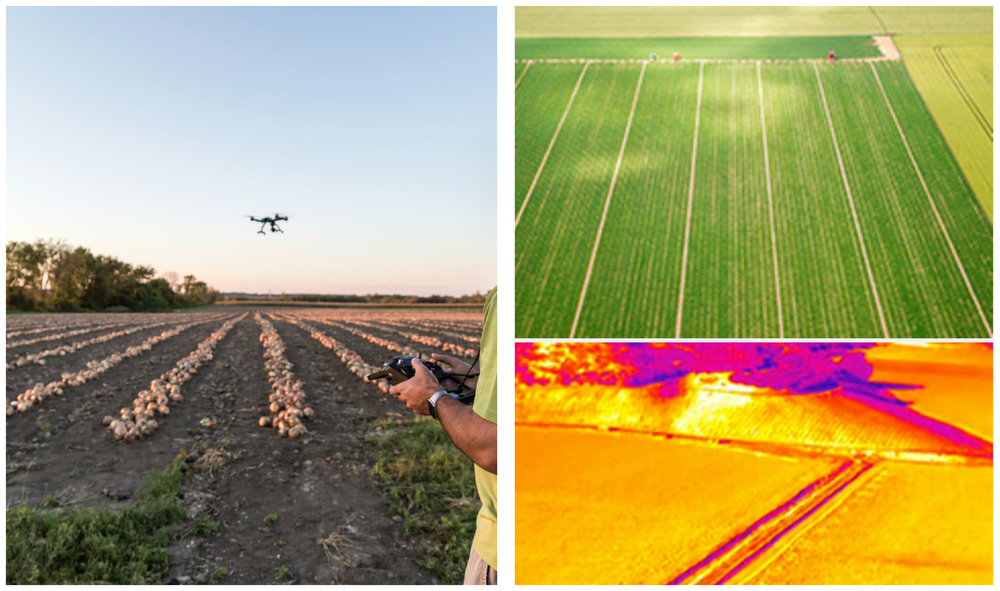 Drones in the Agricultural Industry
