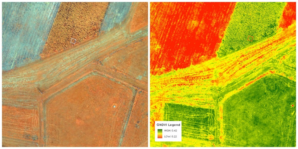 Green normalized difference vegetation index. Sensitive to chlorophyll concentration. Good indicator of plant stress and late growth stages before harvest. PrecisionHawk