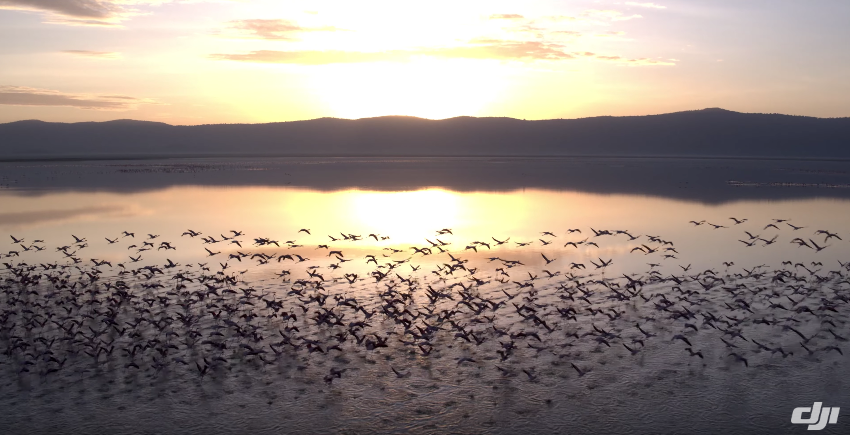 Drones can monitor the migration of animals and conduct population counts