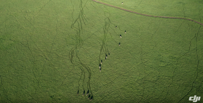 A drone in the air can closely monitor migration patterns