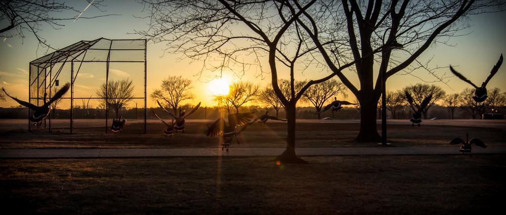 West Potomac Park Field